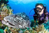 Mike Ball Spoilsport 4 Night Ribbon Reef Cod Hole Coral Sea Osprey Reef