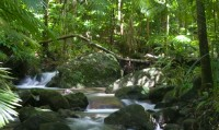 BTS Daintree Tour