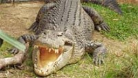 Crocodile Spotting