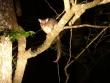 Night Wildlife