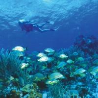 overnight diving trip Cairns Dive Centre