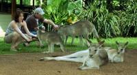 koala and wildlife park