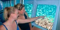 Reef Magic