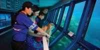Great Adventures - Outer Barrier Reef Pontoon - Underwater Observatory