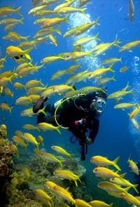 Tusa Dive T6 4 Day PADI Dive Open Water Dive Course