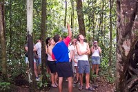 Guided rainforest walk