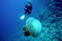 diving cairns