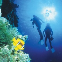 liveaboard reef tour Cairns