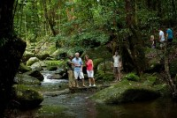 Daintree Walkabout